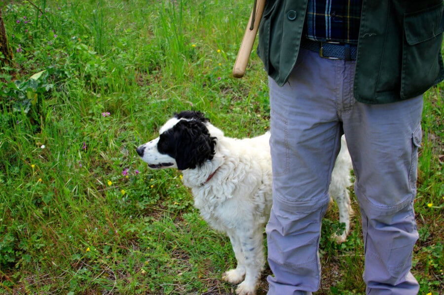 Truffle Hunting Experience Allure of Tuscany