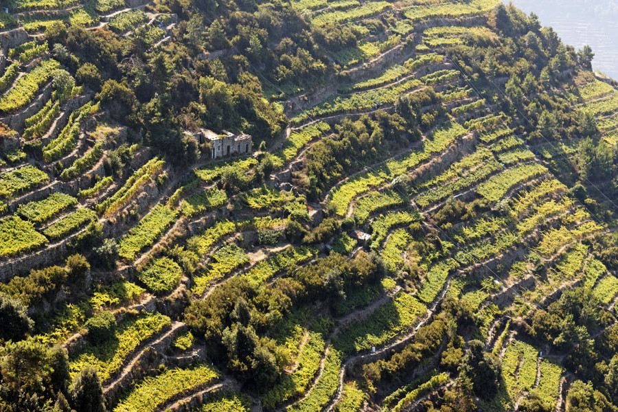 Cinque Terre Wine Private Day Tour