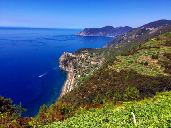 Cinque Terre Private Luxury Tours Wine Tours