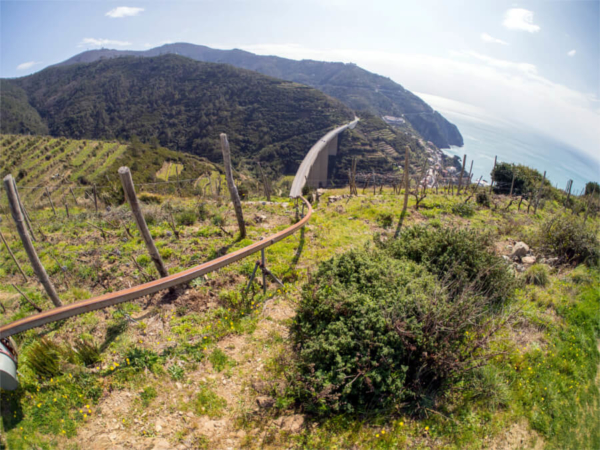 Cinque Terre Wine Hiking Tour Allure Of Tuscany