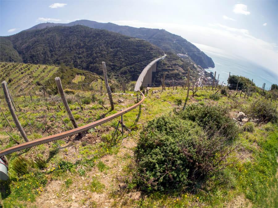 Cinque Terre Wine Hiking Tour Allure Of Tuscany