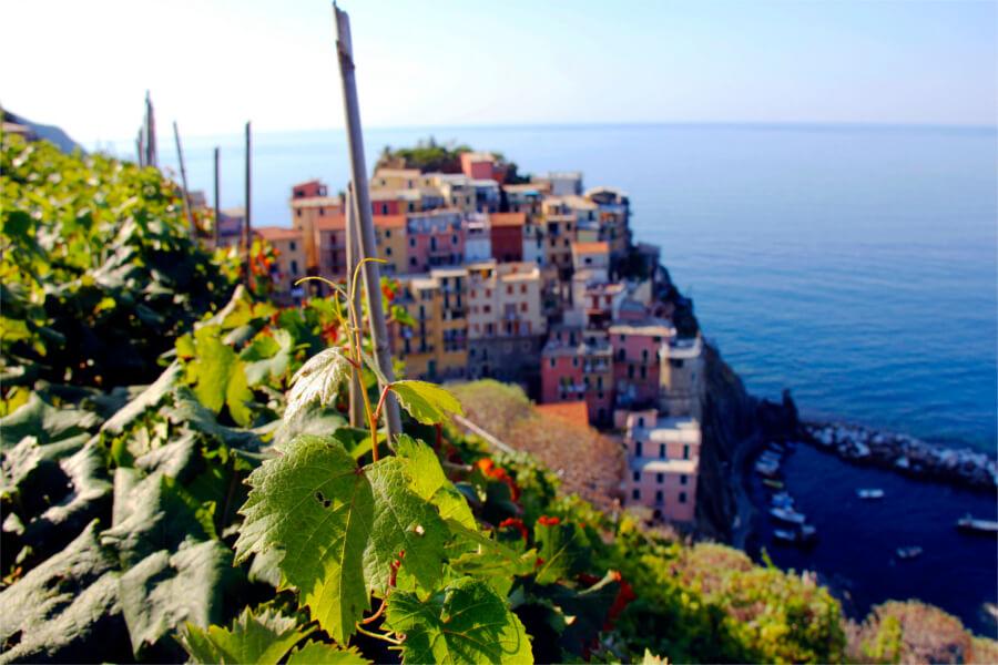 Afbeeldingsresultaat voor cinque terre Walking through the vines