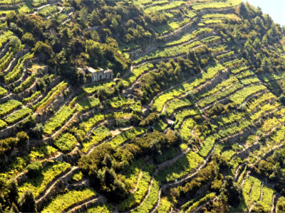 Cinque Terre Wine Tour-Allure-Of-Tuscany